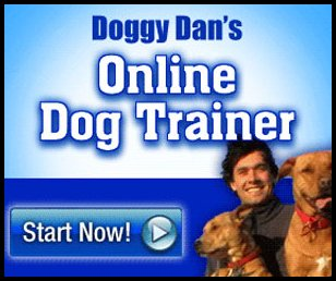 Doggy Dan's Online Dog Training | Certified Trainer